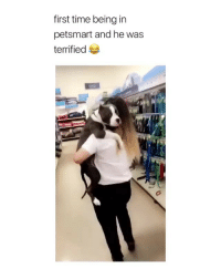 Cute, Wtf, and Petsmart: first time being in  petsmart and he was  terrified THIS IS SO CUTE WTF TAG A DOG LOVER