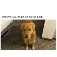 Lit, Memes, and Time: First time ever to be up on the bed! too lit! 😂 👉🏻(@bestvines bestvines)