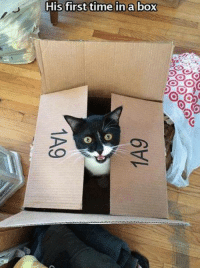 Boxing, Grumpy Cat, and Time: first time first time in a box