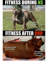Dogs, Memes, and Run: FITNESS DURING NS  l can run 2.4 in  9mins  Come at me bro  Lcan hentak kaki  r three hours  straight  FITNESS AFTER ORD  Run? Tonly run to  the buffet..  I can nap for three  hours straight  My biggest  muscle is my  stomach War dogs