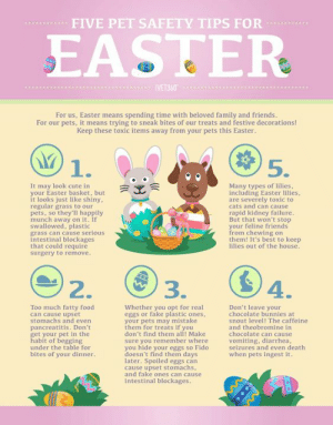Bunnies, Cats, and Cute: FIVE PET SAFETY TIPS FOR  IVET360  For us, Easter means spending time with beloved family and friends.  For our pets, it means trying to sneak bites of our treats and festive decorations!  Keep these toxic items away from your pets this Easter.  1.  5.  It may look cute in  your Easter basket, but  it looks just like shiny,  regular grass to our  pets, so they'll happily  munch away on it. If  swallowed, plastic  grass can cause serious  intestinal blockages  that could require  surgery to remove.  Many types of lilies,  including Easter lilies  are severely toxic to  cats and can cause  rapid kidney failure.  But that won't stop  your feline friends  from chewing on  them! It's best to keep  lilies out of the house,  2  4  Too much fatty food  can cause upset  stomachs and even  Whether you opt for real  eggs or fake plastic ones  your pets may mistake  them for treats if you  don't find them all! Make  sure you remember where  you hide your eggs so Fido  doesn't find them days  later. Spoiled eggs can  cause upset stomachs  and fake ones can cause  intestinal blockages  Don't leave your  chocolate bunnies at  snout level! The caffeine  and theobromine in  chocolate can cause  vomiting, diarrhea  seizures and even death  when pets ingest it.  pancreatitis. Don't  get your pet in the  under the table for  bites of your dinner.