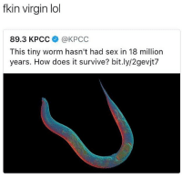 Lol, Sex, and Virgin: fkin virgin lol  89.3 KPCC@KPCC  This tiny worm hasn't had sex in 18 million  years. How does it survive? bit.ly/2gevjt7 I'd tear that mfs cheeks up on my momma