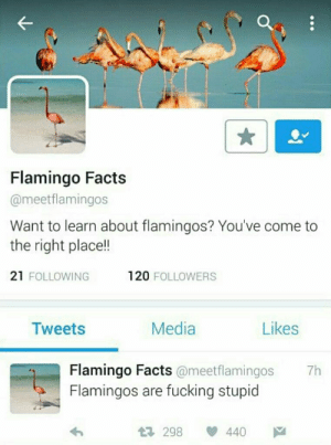 Facts, Fucking, and Irl: Flamingo Facts  @meetflamingos  Want to learn about flamingos? You've come to  the right place!!  21 FOLLOWING  120 FOLLOWERS  Media  Likes  Tweets  Flamingo Facts@meetflamingos  Flamingos are fucking stupid  7h  440  1298 me irl