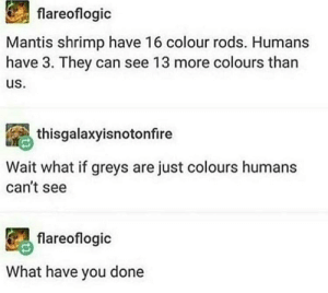 Shrimp good: flareoflogic  Mantis shrimp have 16 colour rods. Humans  have 3. They can see 13 more colours than  us.  thisgalaxyisnotonfire  Wait what if greys are just colours humans  can't see  flareoflogic  What have you done Shrimp good