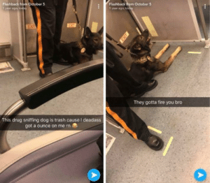 Fire, Funny, and Sorry: Flashback from October  1 year ago, today  Flashback from October 5  1 year ago, today  They gotta fire you bro  This drug sniffing dog is trash cause I deadass  got a ounce on me rn Sorry, Rover via /r/funny https://ift.tt/2QAHf58