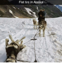Memes, 🤖, and Tires: Flat tire in Alaska He's having a ruff day. Follow @9gag 9gag husky dogsled