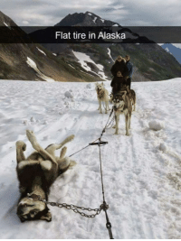 9gag, Dank, and Alaska: Flat tire in Alaska He's having a ruff day. http://9gag.com/gag/aYxQNrV?ref=fbpic