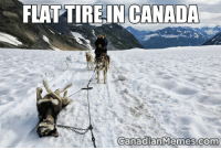 Canadian: FLAT TIRE IN CANADA  Canadian Memes com