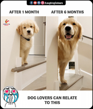 😍: fLaughingColours  AFTER 1 MONTH  AFTER 6 MONTHS  DOG LOVERS CAN RELATE  TO THIS 😍