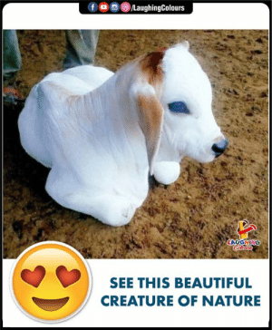 Beautiful, Nature, and Indianpeoplefacebook: fLaughingColours  SEE THIS BEAUTIFUL  CREATURE OF NATURE