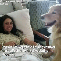 Dogs, Memes, and Las Vegas: fLcck-9 Comfort Dogs  Las Vegas  Dogs in Las Vegas are helping comfo  those affected by the devastating  shooting Amen for dogs and good people. Via @dogsoffreedom - @abcnews Pups @comfortdogs