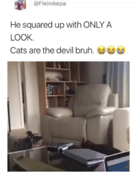 Who's cat is this? 😂 (contact us at partner@memes.com for credit-removal): @Fleimkepa  He squared up with ONLY A  LOOK  Cats are the devil bruh. Who's cat is this? 😂 (contact us at partner@memes.com for credit-removal)