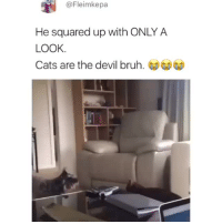 "<p>Lmao this cat is scary 😂</p><p>(<a href=""https://www.instagram.com/momonty1/"" target=""_blank"">@momonty1</a>)<br/></p>: @Fleimkepa  He squared up with ONLY A  LOOK  Cats are the devil bruh. <p>Lmao this cat is scary 😂</p><p>(<a href=""https://www.instagram.com/momonty1/"" target=""_blank"">@momonty1</a>)<br/></p>"