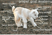 flippy wiggler  cutie tocks  sticky-outy  eg part  gump sticks  proper goat anatomy  wiggly listeners  tiny blinkers  snootle  cher  le  abs  rounds  ers Someone actually took the time to label the parts of a baby goat. I kid you not.