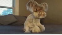 Bunnies, Memes, and Molly: Floof in slowmo is so addictive to watch. Follow @9gag App📲👉@9gagmobile 👈 9gag (📹@wally_and_molly) bunny fluffy rabbit instabunny