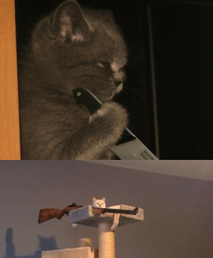floozys:  meanplastic:  WHO WILL WIN?  the one with the knife has passion and determination in it's eyes whilst the cat with the gun looks as if he only has a weapon because he enjoys a life of solitude up in his ivory tower and would never actually fire the gun, but obviously the gun is the superior weapon and passion can only take you so far so there's no doubt that if gun cat wanted to he could be the winner hands down but it's not a question of whether he could physically, but mentally.   : floozys:  meanplastic:  WHO WILL WIN?  the one with the knife has passion and determination in it's eyes whilst the cat with the gun looks as if he only has a weapon because he enjoys a life of solitude up in his ivory tower and would never actually fire the gun, but obviously the gun is the superior weapon and passion can only take you so far so there's no doubt that if gun cat wanted to he could be the winner hands down but it's not a question of whether he could physically, but mentally.
