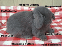 Poofes: Floppity Loppity  Booplesnoot  Fluff erbuttle  Lickitytickler  Poof Loof  Thumping  Puffers  Fuzz scrubbers