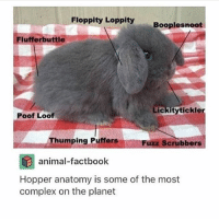 Complex, Memes, and Animal: Floppity Loppity  Booplesnoot  Fluffer buttle  Lickity tickle  Poof Loof  Thumping Puffers  Fuzz Scrubbers  animal-factbook  Hopper anatomy is some of the most  complex on the planet DONT GET THE POOF LOOF AND FLUFFERBUTTLE MIXED UP - Max textpost textposts