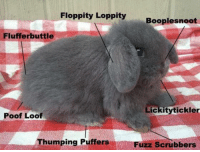 Fuzz,  Poof, and Booplesnoot: Floppity Loppity  Booplesnoot  Flufferbuttle  Lickitytickler  Poof Loof  Thumping Puffers  Fuzz Scrubbers