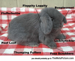 Complex, Tumblr, and Blog: Floppity Loppity  Booplesnoot  Flufferbuttle  Lickitytickler  Poof Loof  Thumping Puffers  Fuzz Scrubbers  you should probably go to TheMetaPicture.com lolzandtrollz:  The Complex Anatomy Of A Bunny