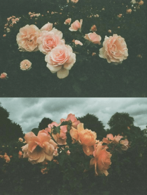 Tumblr, Blog, and Flickr: floralls: by Ekaterina Pronina