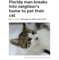 Florida Man, Memes, and Florida: Florida man breaks  into neighbor's  home to pet their  cat  by Colin Wolf December 02, 2016 at 10:51 AM  Photo via Pawsitive Shelter Photography