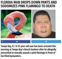 Florida Man, Old Man, and Death: FLORIDA MAN DROPS DOWN PANTS AND  SODOMIZES PINK FLAMINGO TO DEATH  2K  Tampa Bay, FLI A 23-year-old man has been arrested this  morning at Tampa Bay's Busch Gardens after he allegedly  proceeded to sexually assault a pink flamingo in front of  horrified bystanders.