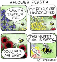 Flower, Sassy, and Baby: FLOWER FEAST  WANTAMY PETALS ARE  TASTE OF UNOCCUPIED  2  THIS BUFFET  SURE IS SASSY.  pOLLINATE  ME BABY  Ot pleumier