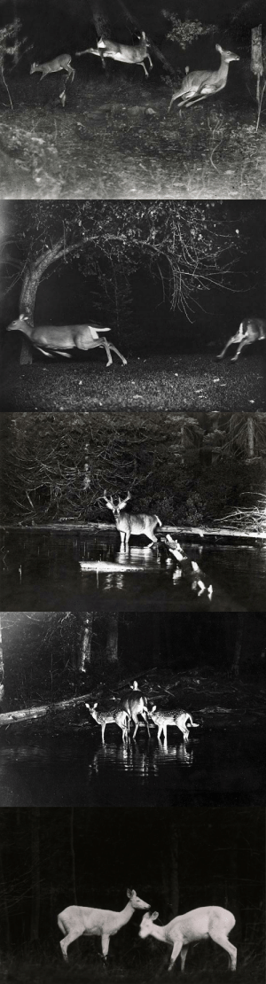 Tumblr, Blog, and Http: flowerinaflame: National Geographic, 1906 (ph. George Shiras III)