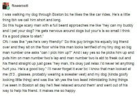 "Dogs, Tbh, and Tumblr: flowernstt  I was walking my dog through Boston bc he likes the like car rides. He's alittle  thing tbh we call him short and long  and I pet your dog? He gets nervous around dogs but your's is so small I think  it's a good place to start.""  Ofc I was like ""yes he's very friendlyl"" So this guy brings his equally big triend  over and they sit on the floor while this man looks terrified of my tiny dog so big  man number one asks ""can I pick him up?"" And i say yes so he picks him up and  puts him on man number two's lap and man number two is abt to freak out and  his friend straight up just goes ""hey man, it's okay just relax l'd never let anything  hurt you. He's a good boy."" I'll never forget it ever bc I know that man looked aft  me (53, glasses, probably wearing a sweater vest) and my dog (kinda goofy  looking little thing) and was like 'ah yes the two least intimidating living things  I've seen in Boston all day he'll feel relaxed around them' and went out of his  way to help his friend. It makes me so happy awesomacious:  This is too sweet"