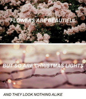 Flower bad, Christmas good: FLOWERS ARE BEAUTIFUL  BUT SO ARE CHRISTMAS LIGHTS  AND THEY LOOK NOTHING ALIKE Flower bad, Christmas good
