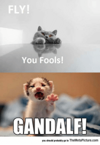 Gandalf, Tumblr, and Blog: FLY!  You Fools!  GANDALF!  you should probably go to TheMetaPicture.com srsfunny:  The Lord Of The Kittens