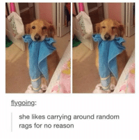 Good doggy: flygoing:  she likes carrying around random  rags for no reason Good doggy