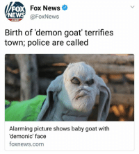 Crying, Fucking, and God: FO  NEW  Fox News  @FoxNews  com  Birth of 'demon goat terrifies  town; police are called  Alarming picture shows baby goat with  'demonic' face  foxnews.comm this is probably the funniest thing I've seen all week oh my god imagine this fucking goat running up to you and your first instinct is to call 911 because you literally think it's a demon oh my god imagine this thing running toward you at night or imagine helping the mother goat give birth and this poor monster pops out gjksnfief I'm actually crying