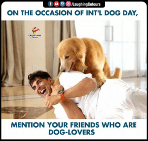 Friends, Happy, and World: foC/LaughingColours  ON THE OCCASION OF INT'L DOG DAY,  LAUGHING  Celewrs  MENTION YOUR FRIENDS WHO ARE  DOG-LOVERS A Dog Is The Only Creature In This World Who Loves You More Than He Loves Himself.. Happy #InternationalDogDay #SaveAnimals #funnymemes #funnyjokes