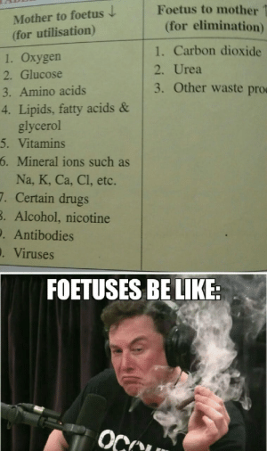 Low effort meme from bio textbook: Foetus to mother  Mother to foetus  (for utilisation)  (for elimination)  1. Carbon dioxide  1. Oxygen  2. Urea  2. Glucose  3. Other waste pro  3. Amino acids  4. Lipids, fatty acids &  glycerol  5. Vitamins  6. Mineral ions such as  Na, K, Ca, Cl, etc.  7. Certain drugs  B. Alcohol, nicotine  . Antibodies  . Viruses  FOETUSES BE LIKE:  OCCU Low effort meme from bio textbook