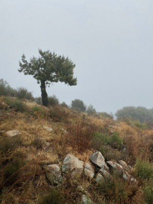 Fog can make for some beautiful and scenic shots: Fog can make for some beautiful and scenic shots