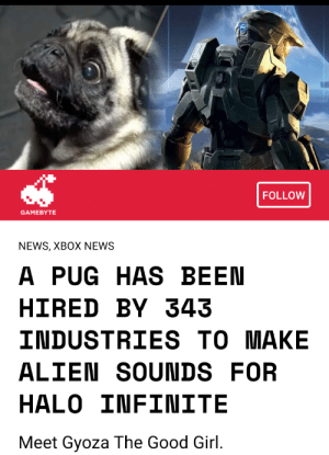 doggos-with-jobs:Gyoza, the newest member of the sound effect team at 343 studios: FOLLOW  GAMEBYTE  NEWS, XBOX NEWS  A PUG HAS BEEN  HIRED BY 343  INDUSTRIES TO MAKE  ALIEN SOUNDS FOR  HALO INFINITE  Meet Gyoza The Good Girl. doggos-with-jobs:Gyoza, the newest member of the sound effect team at 343 studios