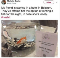 Being Alone, Belgium, and Fish: Follow  Michelle Cooke  @Mich Cooke  My friend is staying in a hotel in Belgium.  They've offered her the option of renting a  fish for the night, in case she's lonely.  #noshit  Alone in your room and  want company?  RENT-A-FISH <p>It's nice to have a friend, whatever species they may be</p>