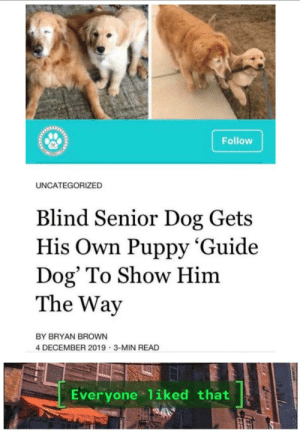 me irl: Follow  UNCATEGORIZED  Blind Senior Dog Gets  His Own Puppy 'Guide  Dog' To Show Him  The Way  BY BRYAN BROWN  4 DECEMBER 2019 · 3-MIN READ  Everyone liked that me irl