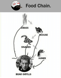 Bear Grylls: Food Chain.  RASS  OUSE  SNAKES  HAWK  BEAR GRYLLS