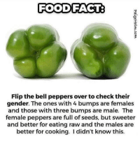 Did u just assume my peppers gender?? 😡😡😡😡😡: FOOD FACT  Flip the bell peppers over tocheck their  gender. The ones with 4 bumps are females  and those with three bumps are male. The  female peppers are full of seeds, but sweeter  and better for eating raw and the males are  better for cooking. didn't know this. Did u just assume my peppers gender?? 😡😡😡😡😡