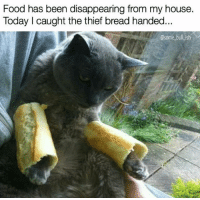 this cat burglar don't want naan if you ain't got buns hun (rp @some_bull_ish 👈 fav!): Food has been disappearing from my house.  Today I caught the thief bread handed  @some bull ish this cat burglar don't want naan if you ain't got buns hun (rp @some_bull_ish 👈 fav!)