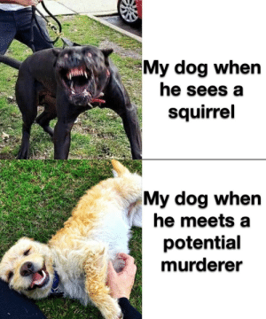 Fookin' squirrel I'll get you! : Fookin' squirrel I'll get you!