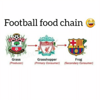OMG 😳😂👇: Football food chain  LIVERPOOL  FCB  Grass  (Producer)  Grasshopper  (Primary Consumer)  Frog  (Secondary Consumer) OMG 😳😂👇