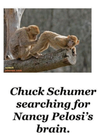 Memes, Brain, and 🤖: footheR  jokeroo.com  Chuck Schumer  searching for  Nancy Pelosi's  brain. This Is Priceless! 🤣