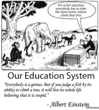 """Albert Einstein, Life, and Einstein: For a fair selection  everybody has to take  the same exam: please  climb that tree  AI  st  Our Education System  Everybody is a genius. But if you judge a fish by its  ability to climb a tree, it will live its whole life  believing that it is stupid.""""  Albert Einstein"""