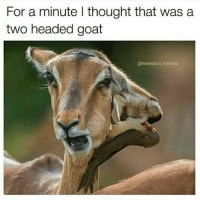 Had to zoom in lol @pmwhiphop pmw: For a minute l thought that was a  two headed goat  @honey bun memes Had to zoom in lol @pmwhiphop pmw