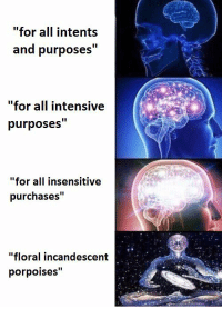 """Non Existent Existentialist: """"for all intents  and purposes""""  """"for all intensive  purposes""""  """"for all insensitive  purchases""""  """"floral incandescent  porpoises"""