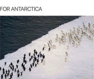 For the glory of fish!: FOR ANTARCTICA For the glory of fish!